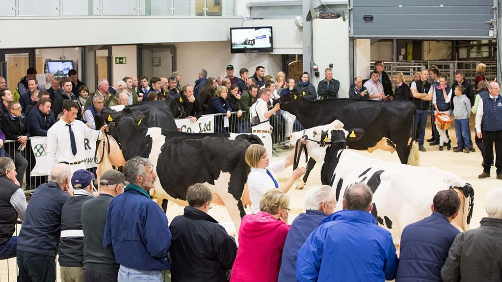 Crowds gathered at Borderway Mart for the Northern Dairy Expo where the Laird's won supreme champion