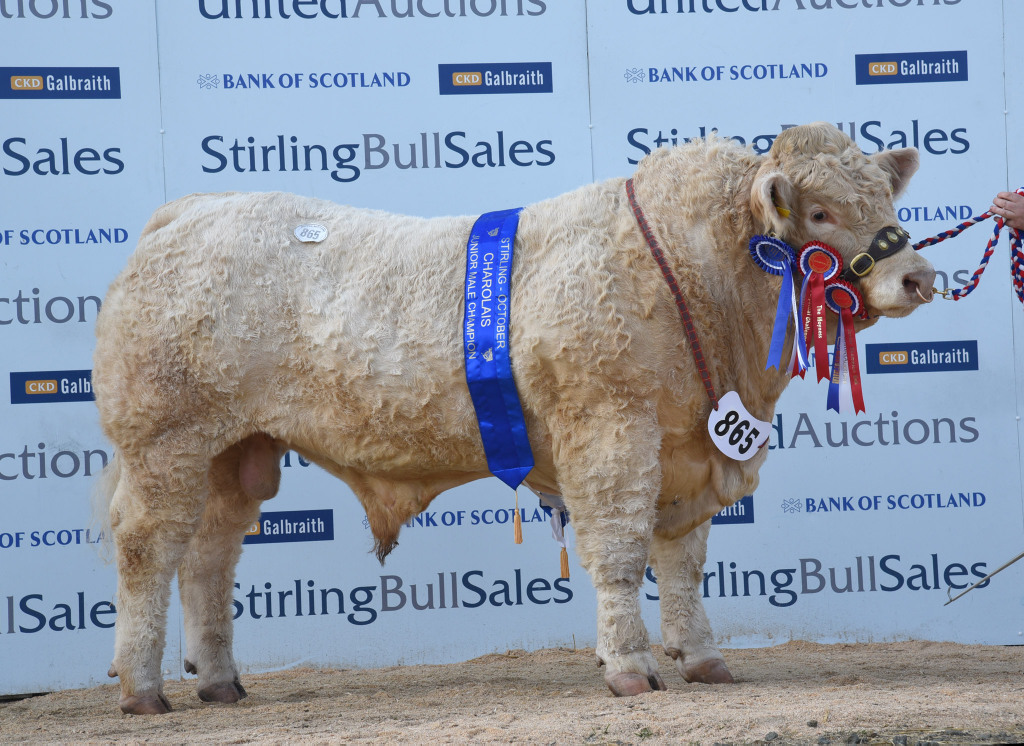 Stirling 2015: Balthayock Justice leads in Charolais ring