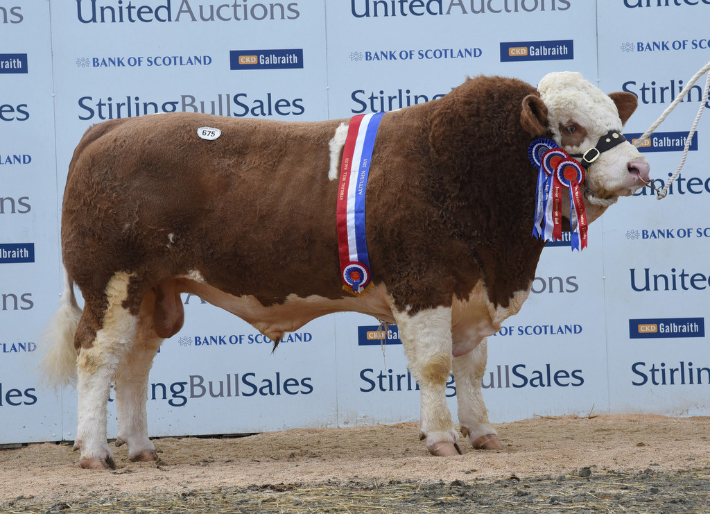 Stirling 2015: Simmentals see nine bulls secure five-figure bids