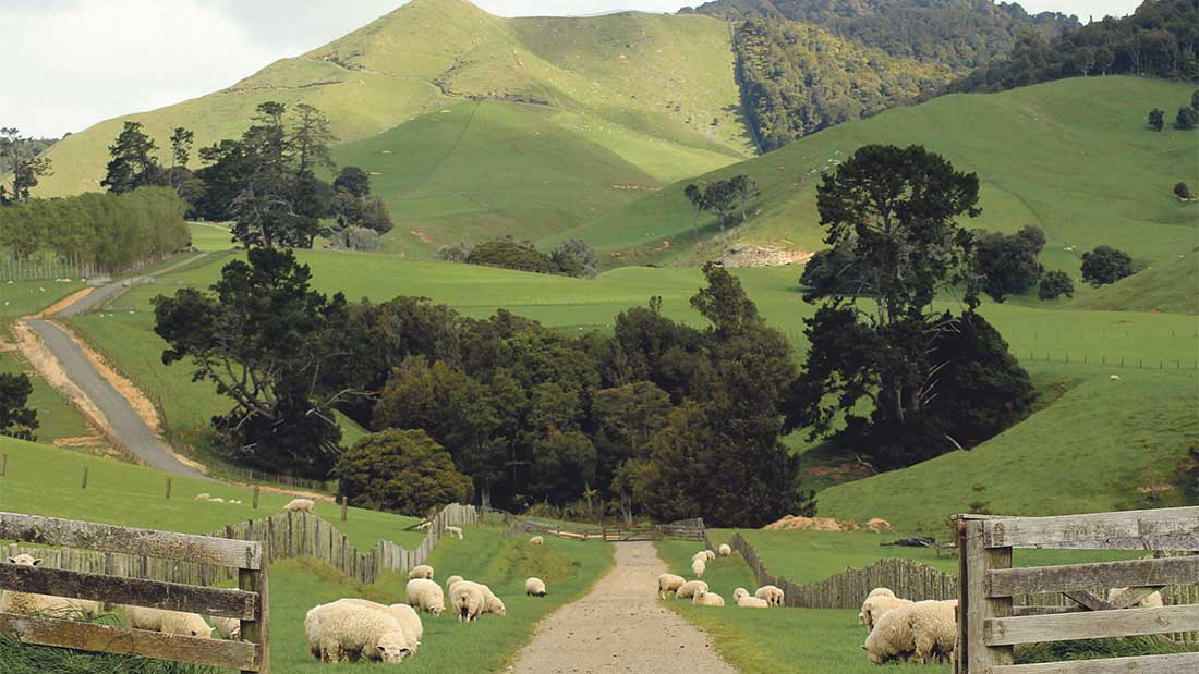Falling New Zealand sheep numbers could provide UK producer boost