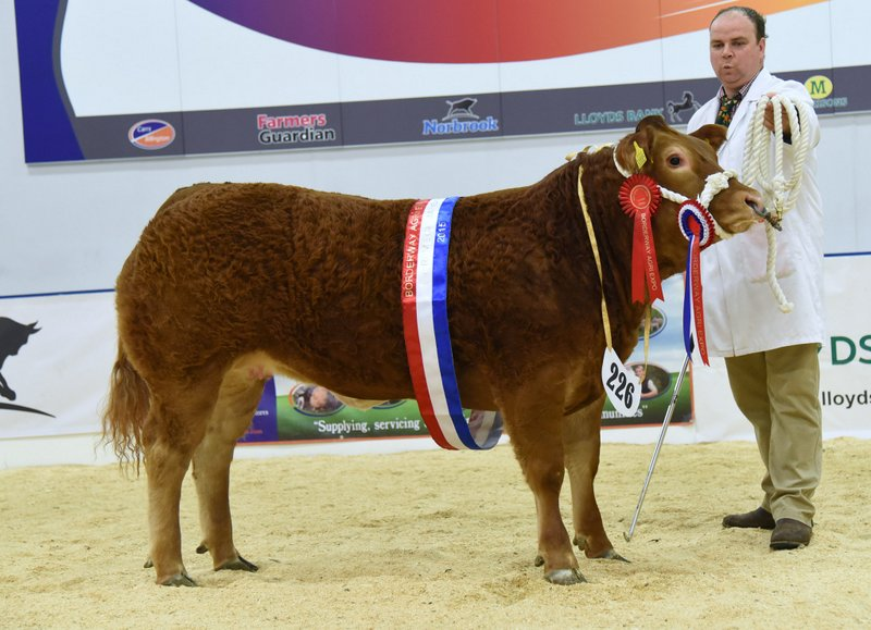 Limousin-cross heifer takes Agri-Expo supreme