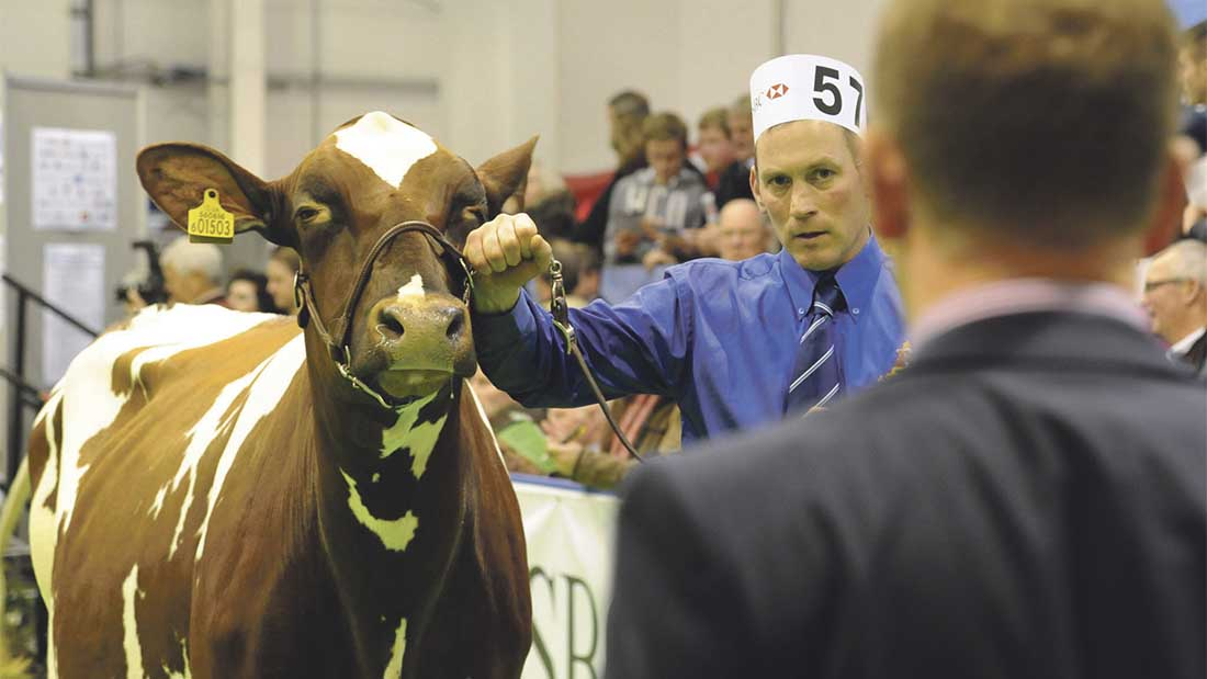 AgriScot Preview: Gloucestershire judge to take centre stage