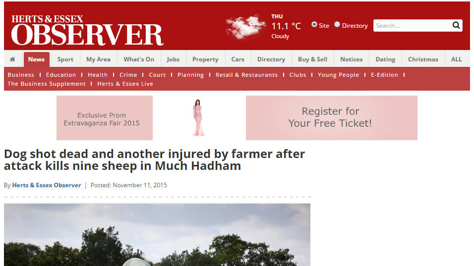 Dog shot dead and another injured by farmer after attack kills nine sheep in Much Hadham