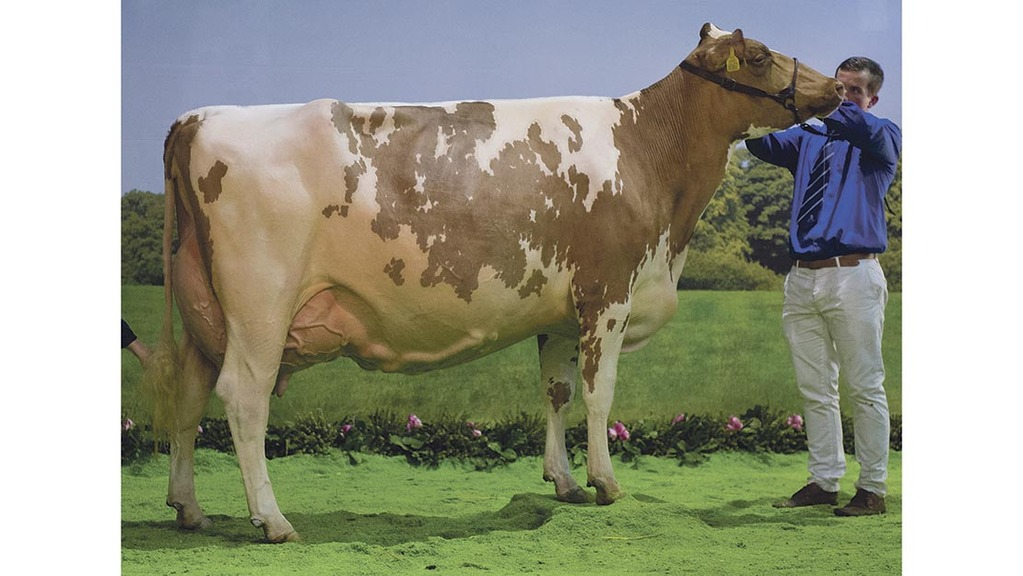 Reserve supercow