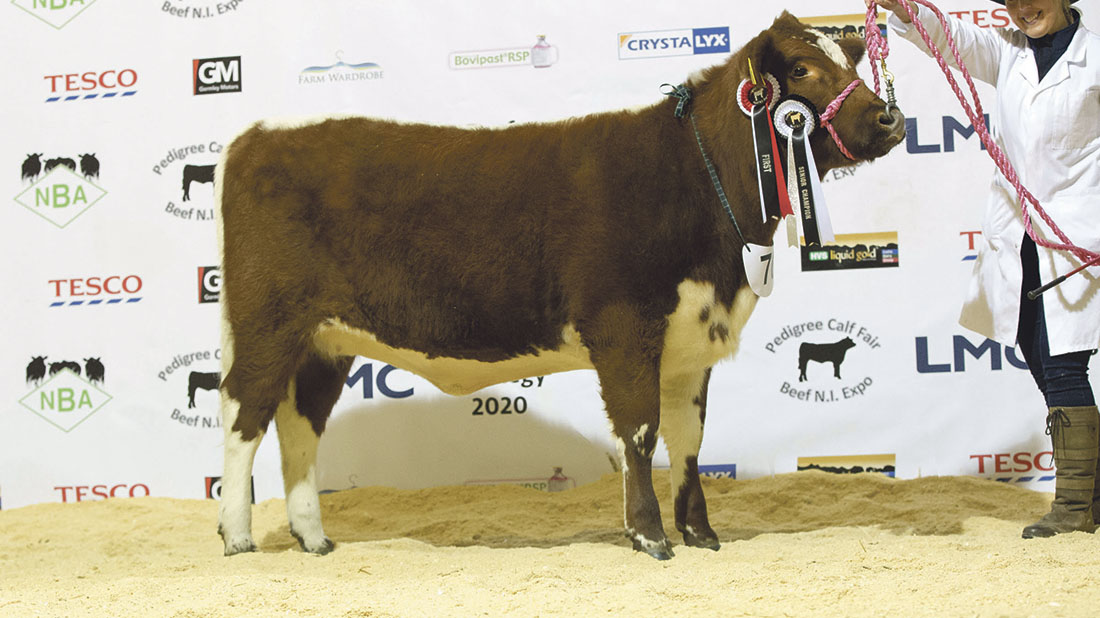 Irish Moiled senior champion, Curraghnakeely Pandora 7.