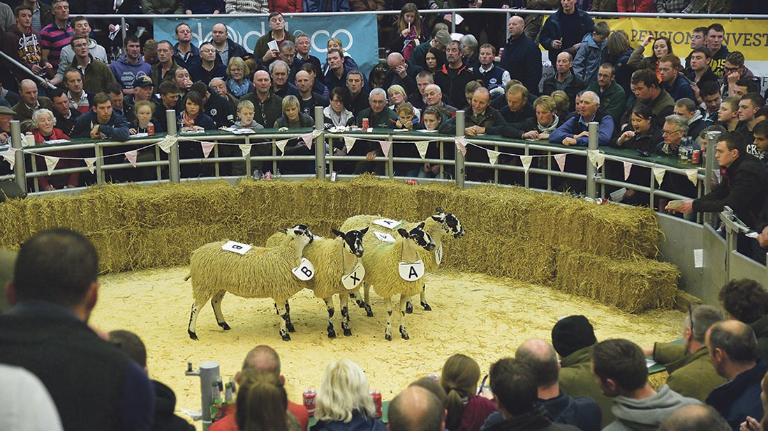 Competitors had to place four gimmer hoggs in each of seven breeds.
