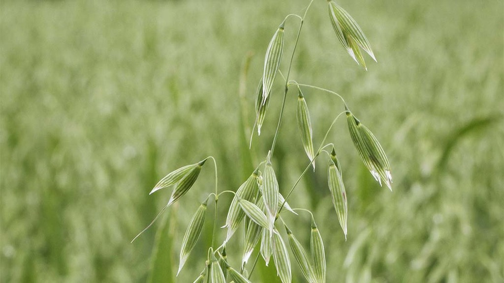 Industry investment bolsters AHDB nitrogen and sulphur research in oats and wheat
