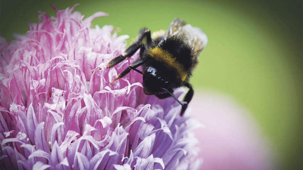Growers boost pollinator habitats with help from Operation Pollinator