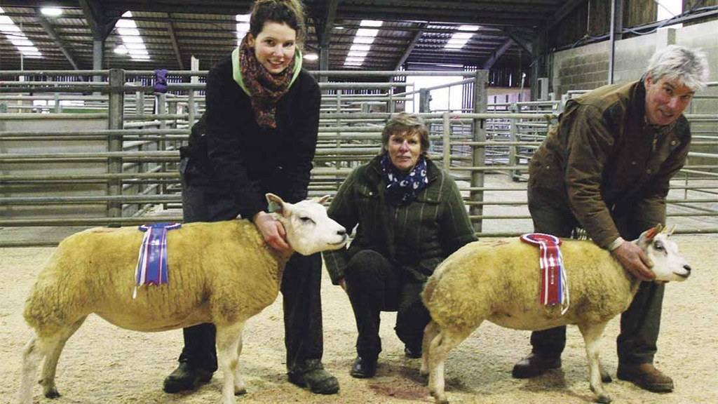 Triple top for Davis family in Northern Beltex winter show