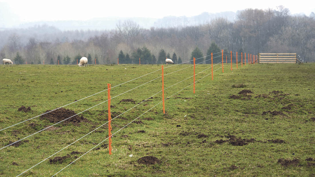 How to use electric fences with sheep