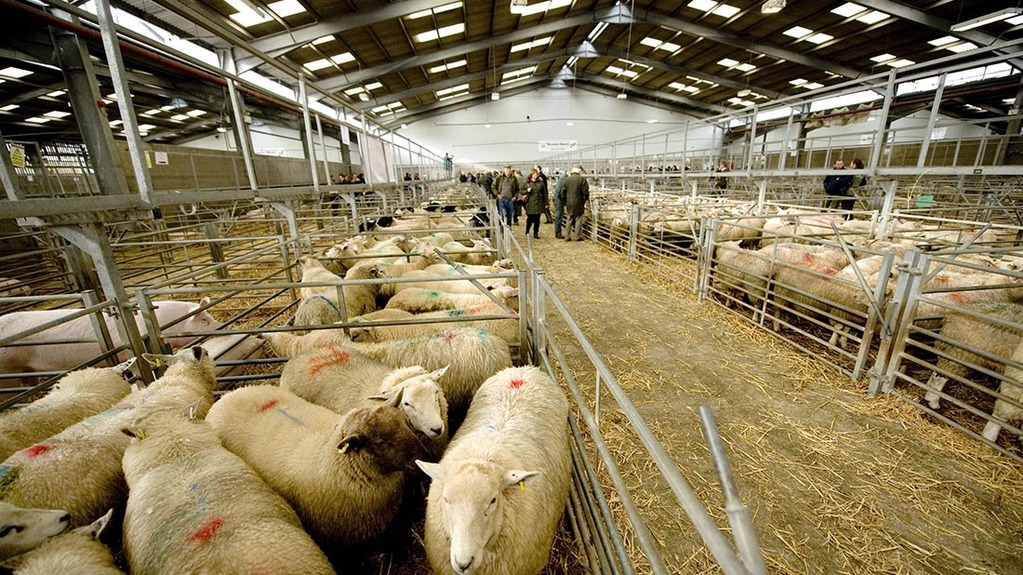 'There is a brighter trade' - Optimism at UK marts despite Brexit concerns