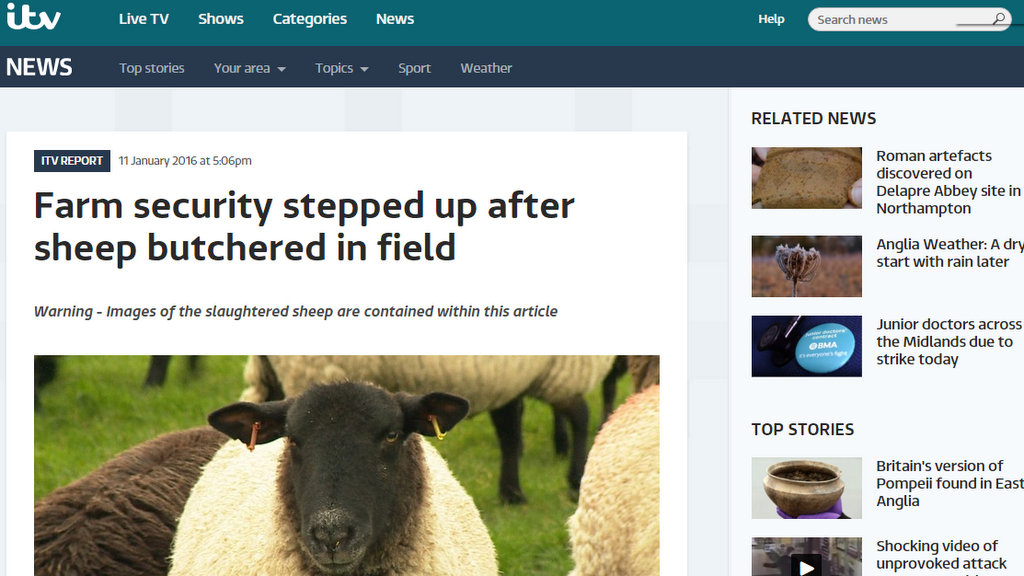 Farm security stepped up after sheep butchered in field