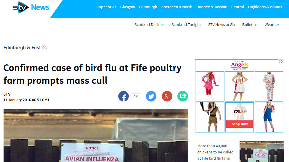 Confirmed case of bird flu at Fife poultry farm prompts mass cull