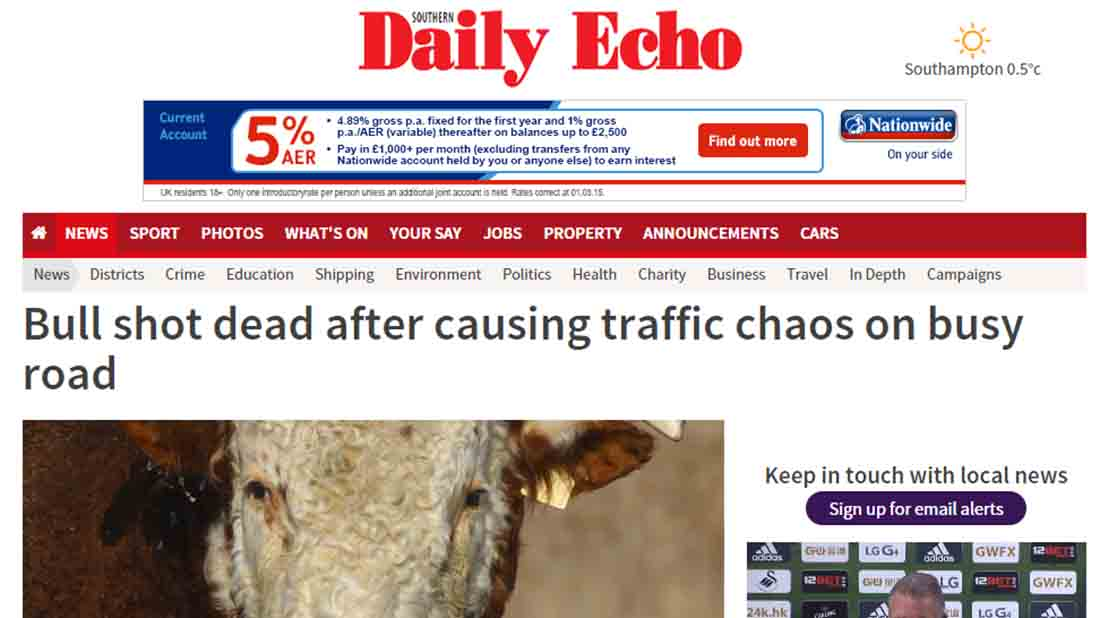 Bull shot dead after causing traffic chaos on busy road
