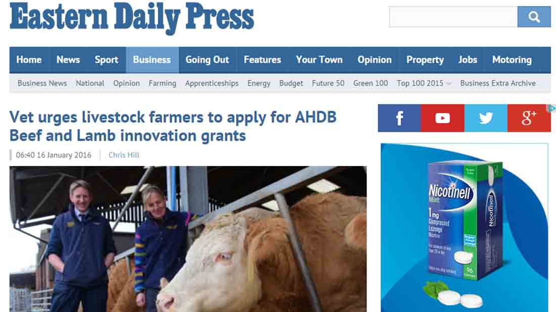 Vet urges livestock farmers to apply for AHDB Beef and Lamb innovation grants
