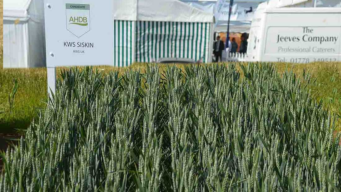 Rank Hovis Milling finds success with KWS Siskin