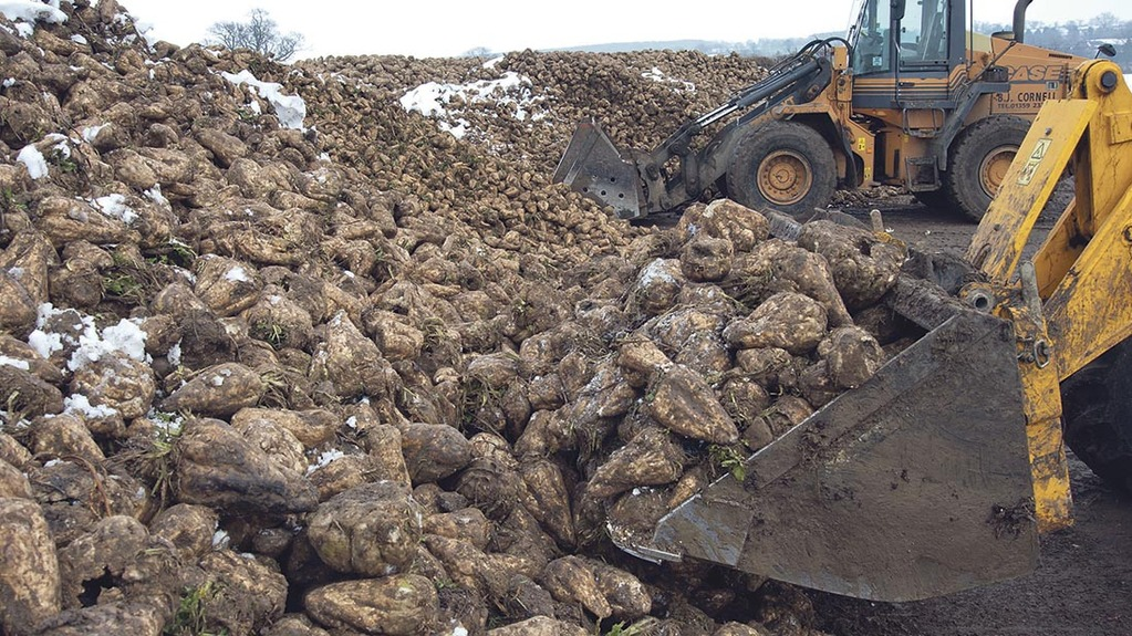 Higher yield trend continues with 2017 sugar beet Recommended List new additions