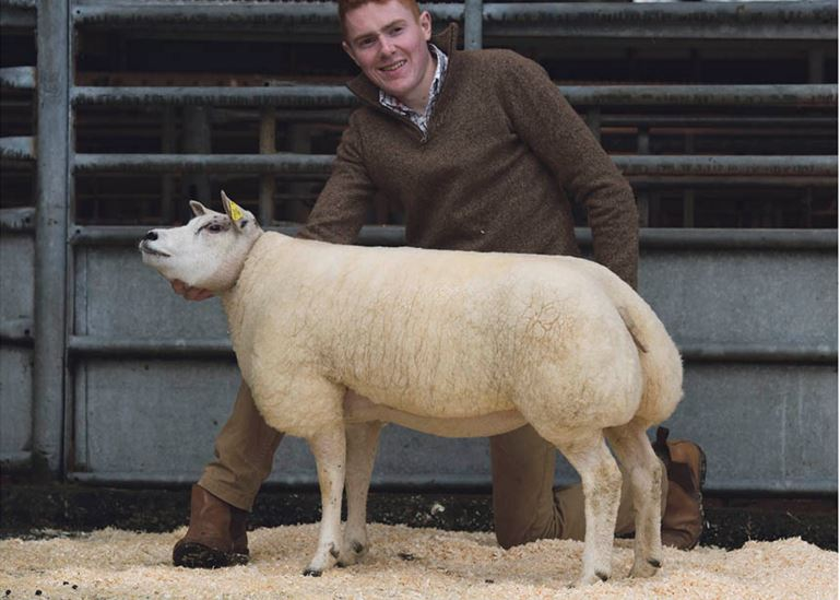 4,300gns top for Chelford Beltex