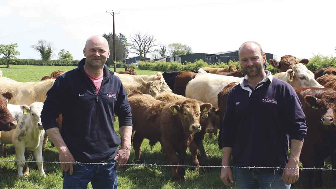 Beef Special: AI gives beef herd fertility a boost