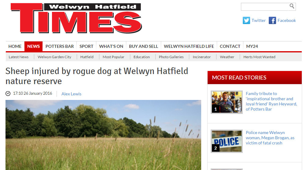 Sheep injured by rogue dog at Welwyn Hatfield nature reserve