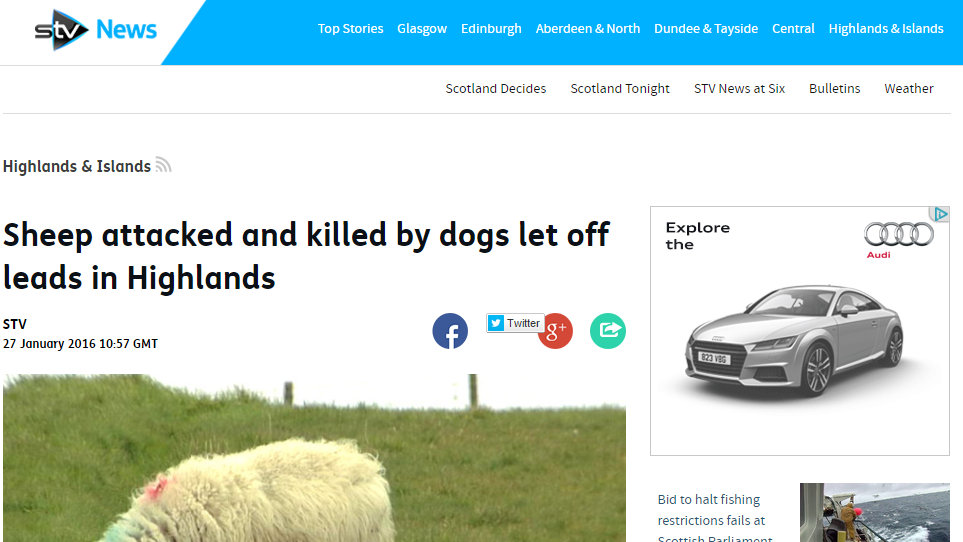 Sheep attacked and killed by dogs let off leads in Highlands