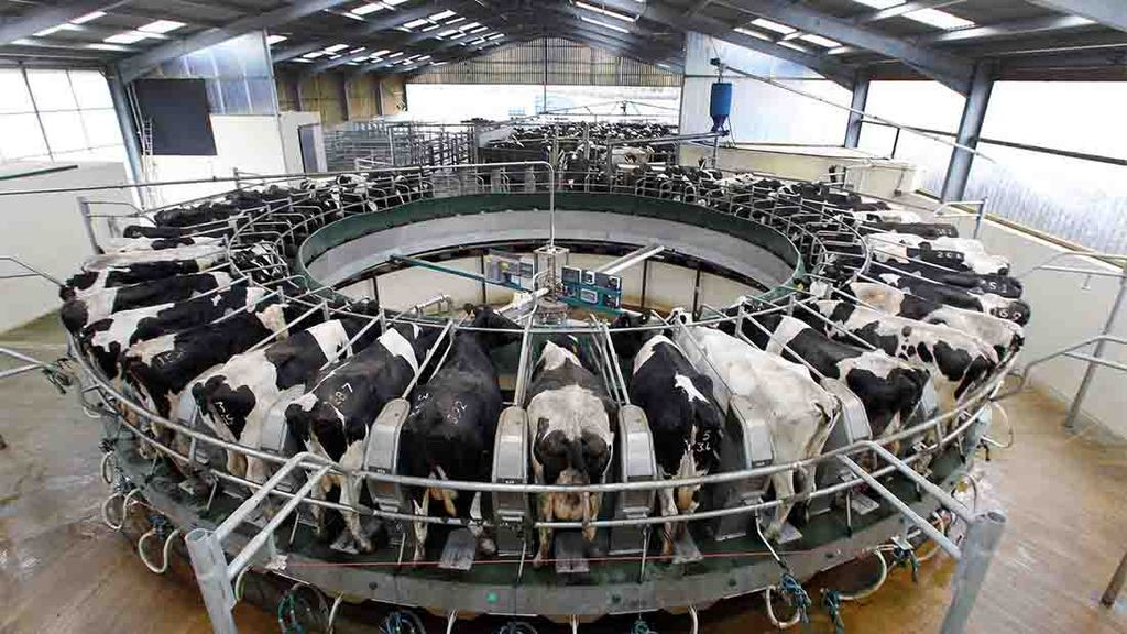 Milking now takes two hours for 320 cows, when it previously took five for a 200-cow herd