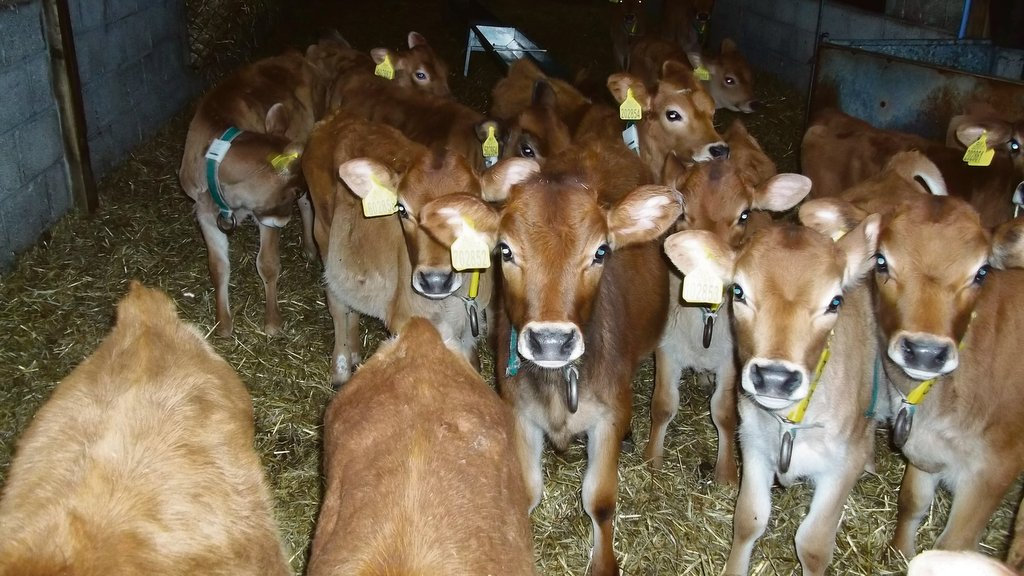 Cowmen Comment: Christopher Murley - new year new milk prices?