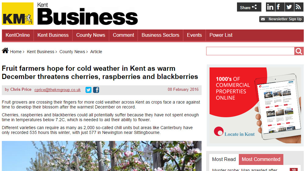 Fruit farmers hope for cold weather in Kent