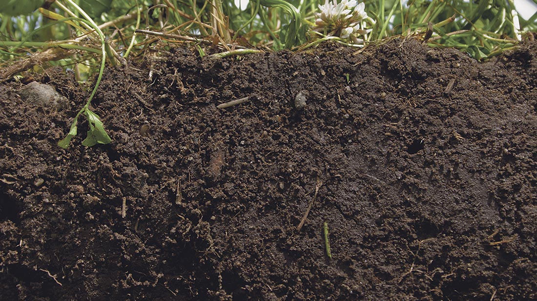 'Healthy soil is essential to life on Earth', Environmental Audit Committee chairman, Mary Creagh