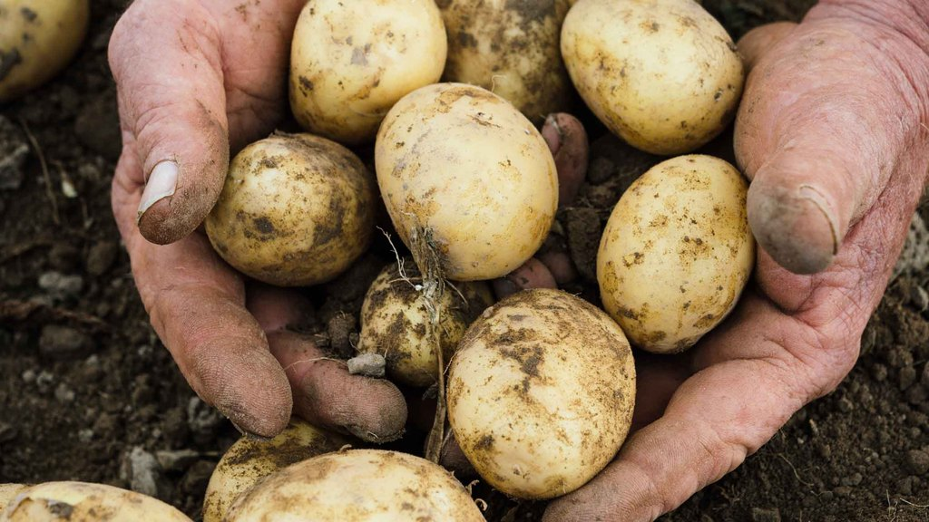 Imported potato prices beginning to match domestic