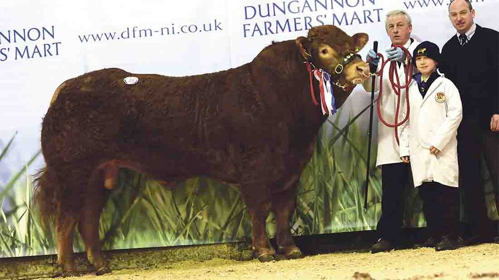 Two herds joint top at Dungannon Limousin sale