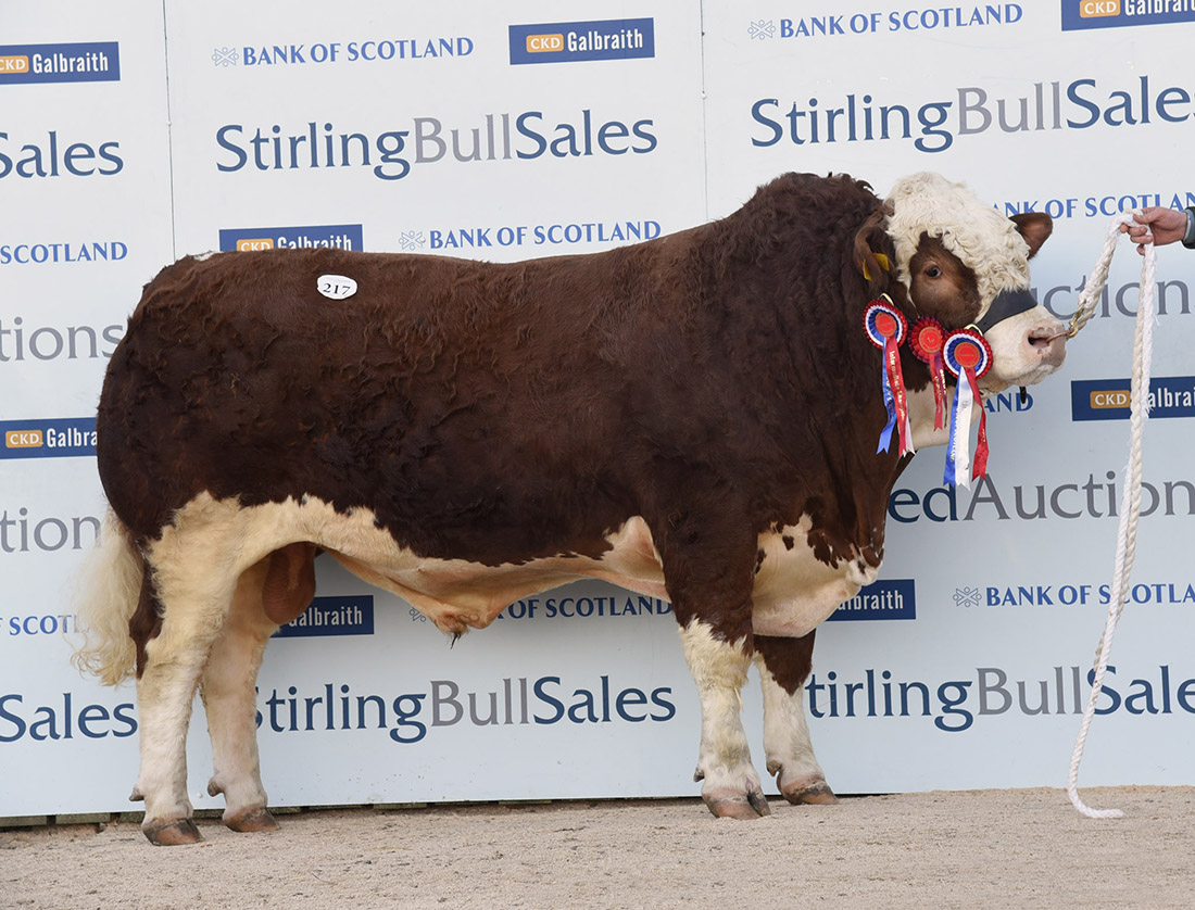 Simmental averages up and a top of 22,000gns