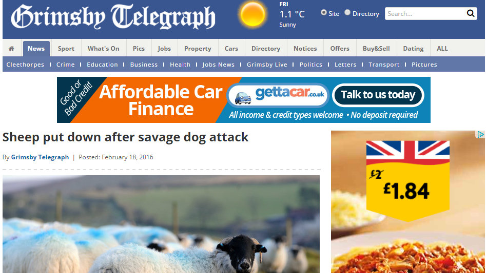 Sheep put down after savage dog attack