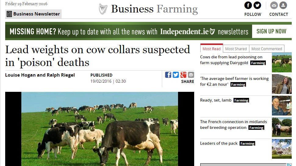 Lead weights on cow collars suspected in 'poison' deaths