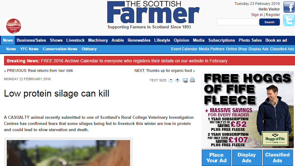Low protein silage can kill
