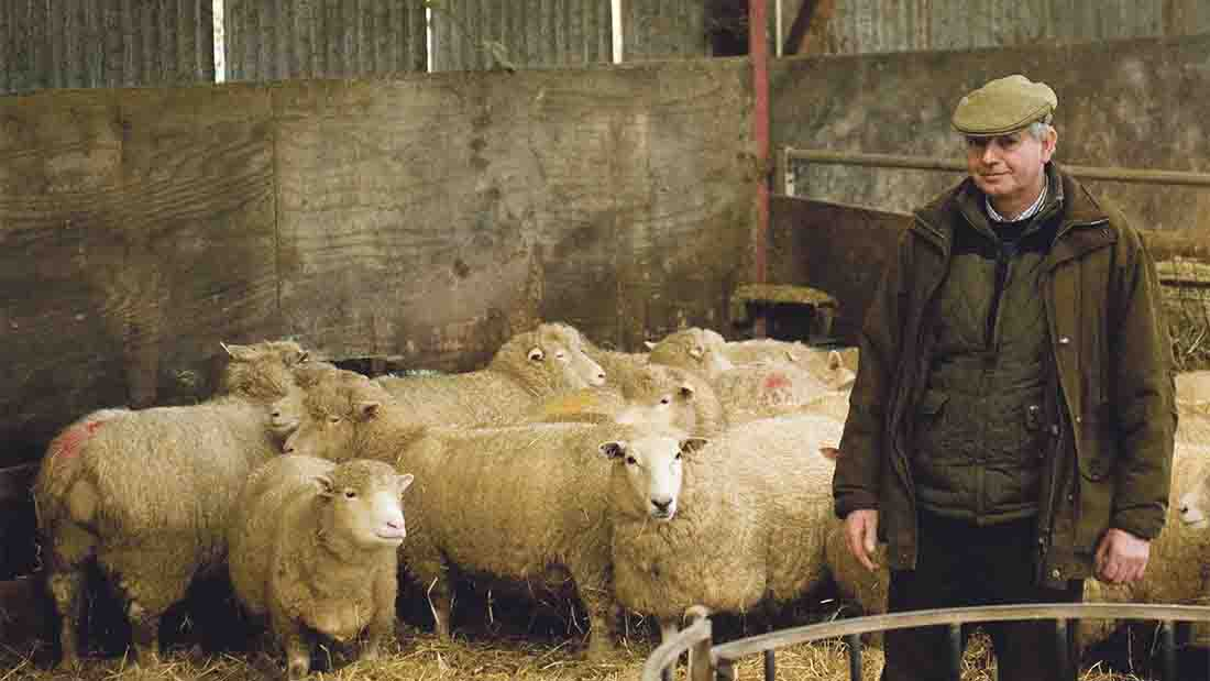 Alan Bickley runs a 300-ewe Poll Dorset flock at Mill House, Puddington, near Tiverton, Devon.