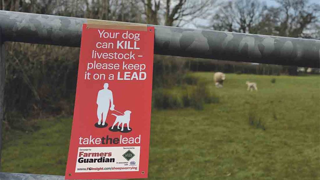 Andrew Gillett: How the Government could take the lead on livestock worrying