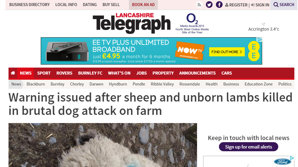 Warning issued after sheep and unborn lambs killed in brutal dog attack on farm