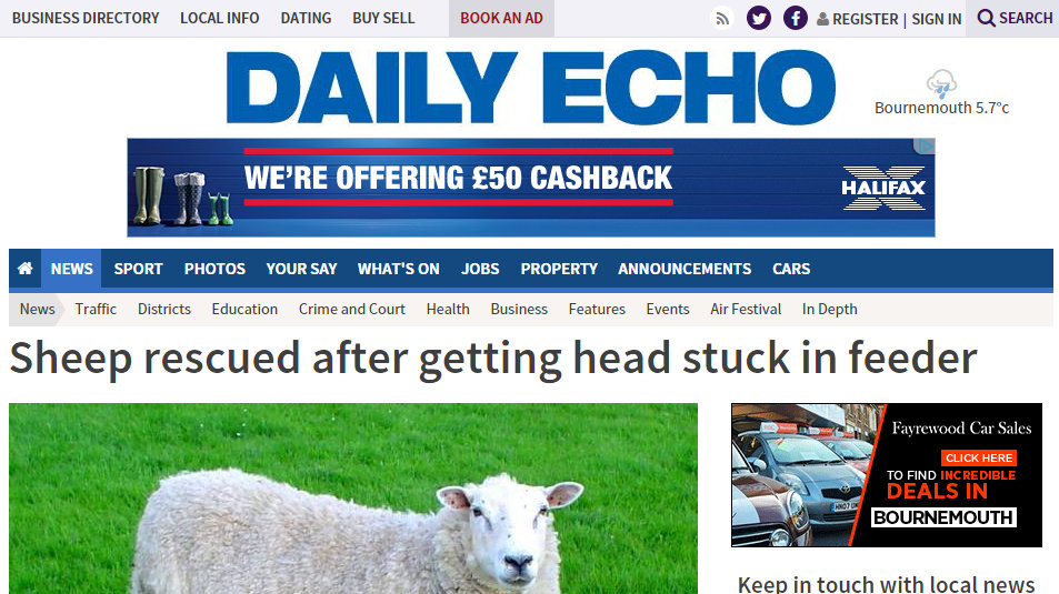 Sheep rescued after getting head stuck in feeder