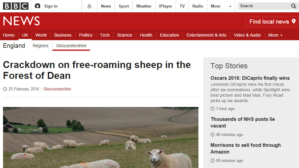Crackdown on free-roaming sheep in the Forest of Dean