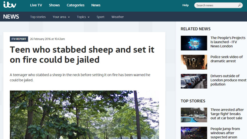 Teen who stabbed sheep and set it on fire could be jailed