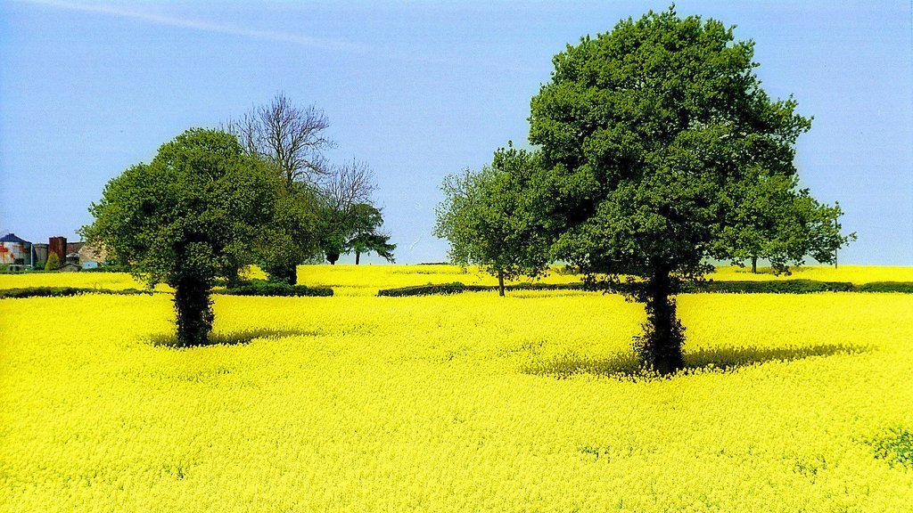 Weather influence on oilseed yields revealed