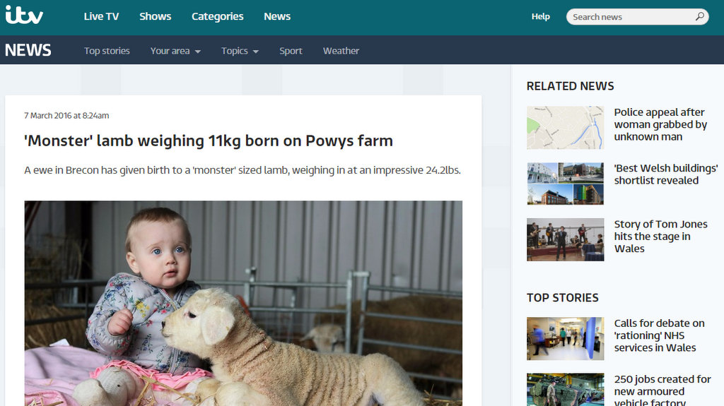 'Monster' lamb weighing 11kg born on Powys farm