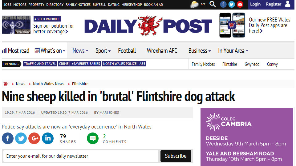 Nine sheep killed in 'brutal' Flintshire dog attack