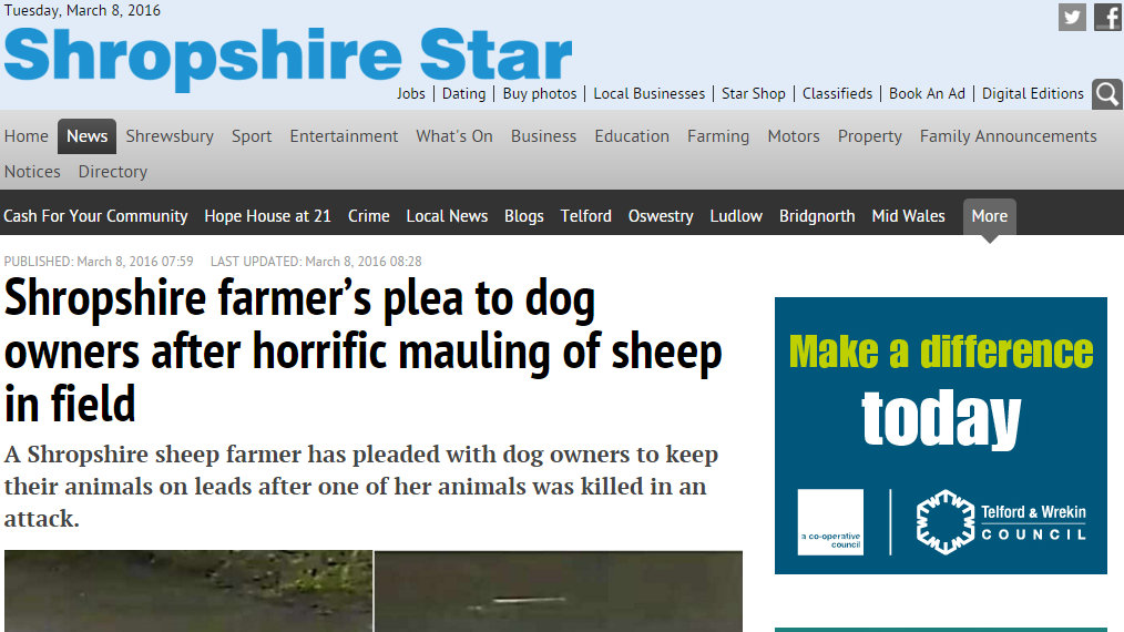 Shropshire farmer's plea to dog owners after horrific mauling of sheep in field