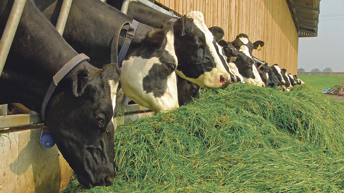 Zero-grazing: Trim costs by cutting and carrying