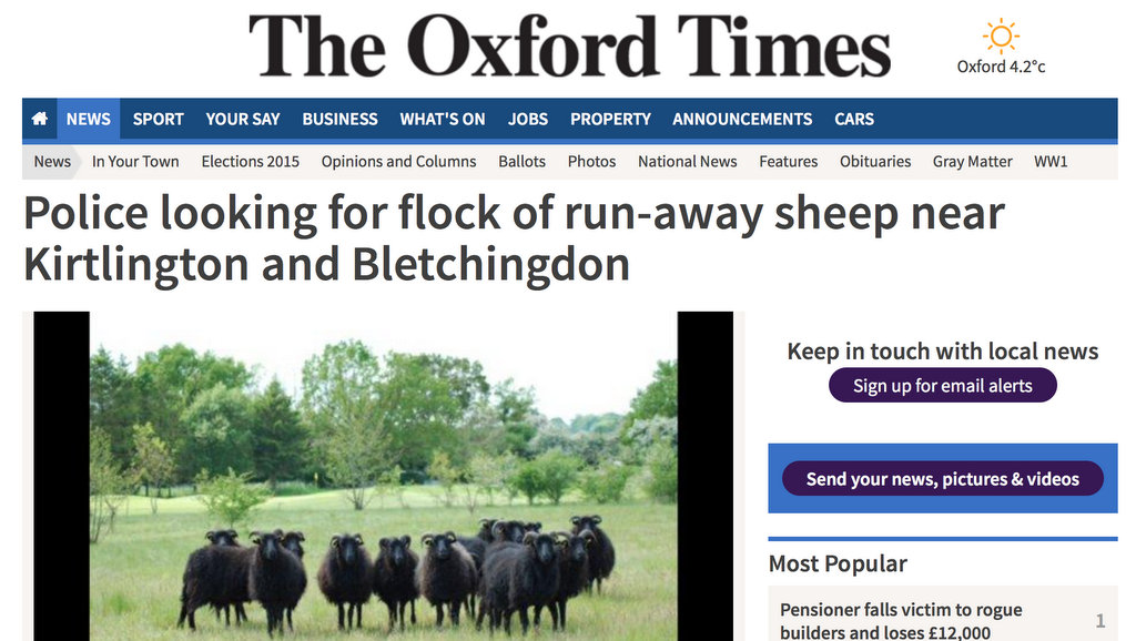 Police looking for flock of run-away sheep near Kirtlington and Bletchingdon