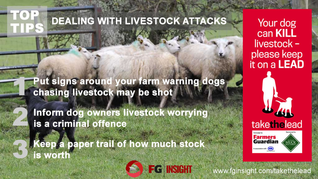 Five top tips on preventing and dealing with livestock
