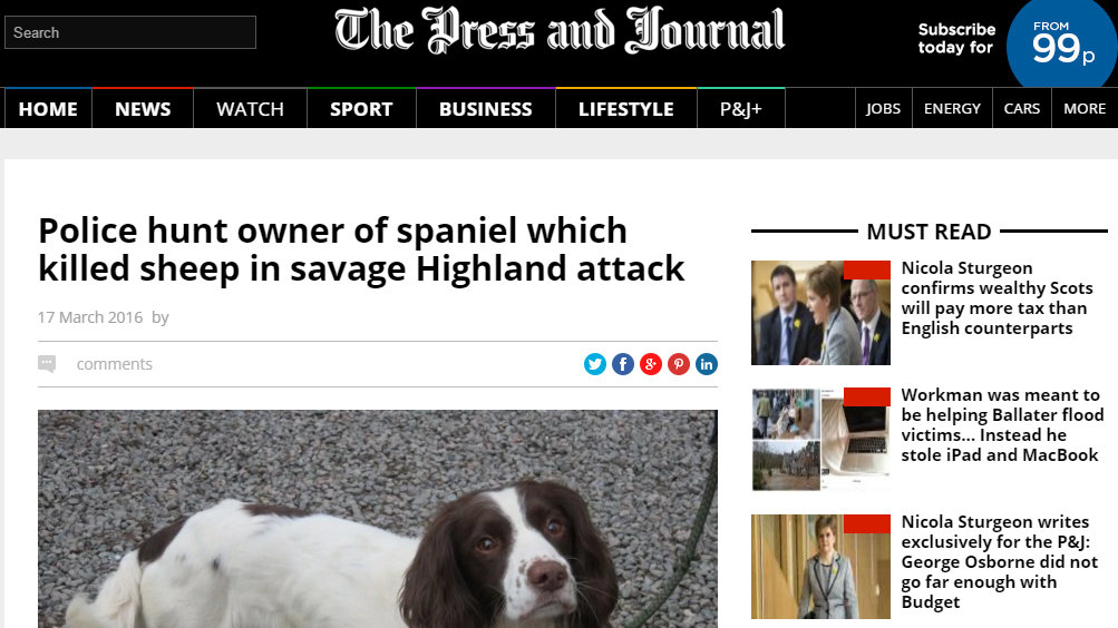 Police hunt owner of spaniel which killed sheep in savage Highland attack