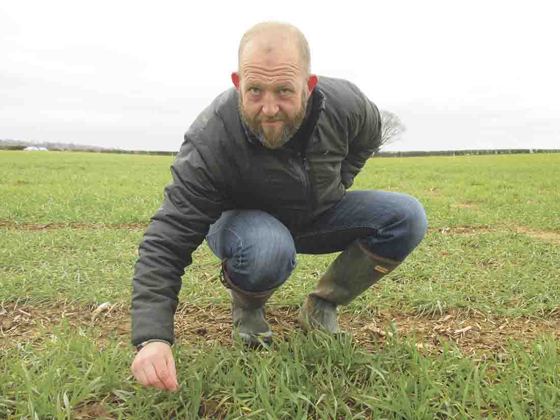 Cold spell will slow but not stop septoria